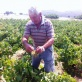 chatzigeorgiou-wines-from-limnos-21