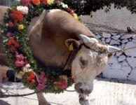 Taurus Festival